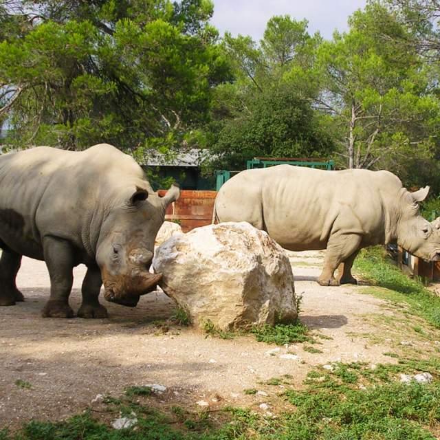Sortie au zoo de Montpellier des MS